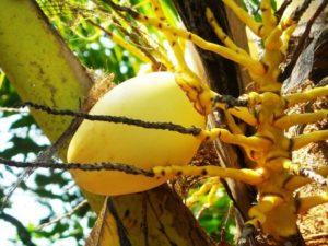 Kokosöl gegen Sonnenbrand