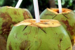 kokoswasser frisch aus der kokosnuss