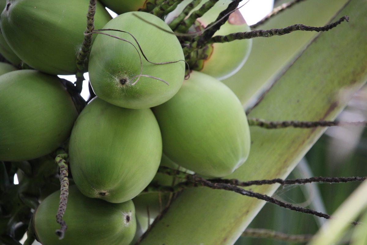 Bio Kokosnusswasser kaufen